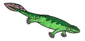 English: Acanthostega gunnari, an extinct tetr...