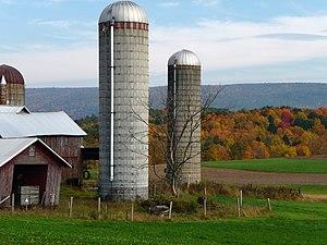 English: Grain silos on a dairy farm in Brunsw...