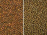 Kacang arab asal Benggala (kiri) dan asal Eropa (kanan)