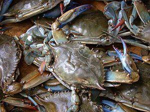 English: Blue crab on market in Piraeus - Call...