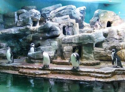 Penguinarium - Wikipedia