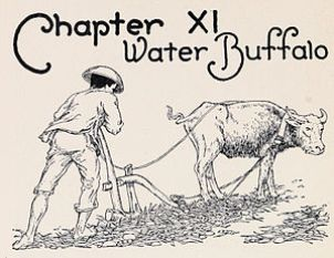 The illustration for Chapter 11 of Fil and Fil...