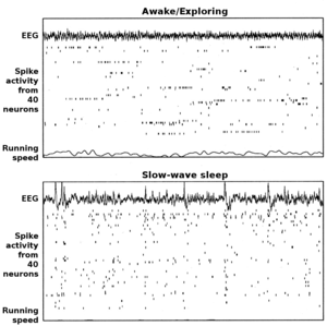 Examples of rat hippocampal EEG and CA1 neural...