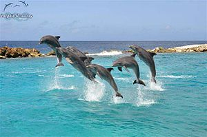English: Dolphin Show