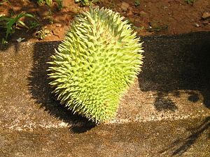 English: Durian