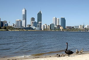Black Swan on the Swan River, Perth Western Au...