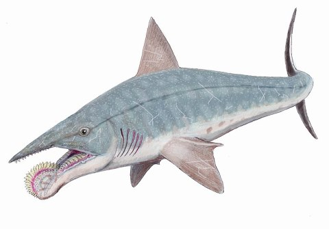 File:Helicoprion bessonovi1DB.jpg