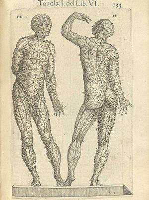 Español: Anatomía del cuerpo humano, Roma, 1560