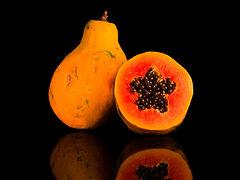 Mamão papaia (Carica papaya L.) foto pro Rodrigo Tetsuo Argenton, parte do Programa de ilustração