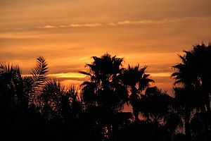 A sunset and the silhouettes of palm trees. Th...