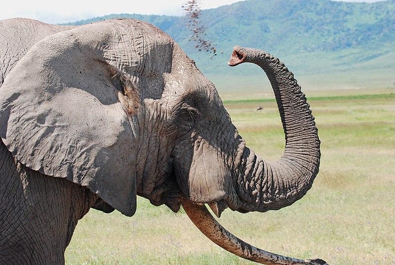 Berkas:Ngorongoro 2012 05 30 2692 (7500966822).jpg