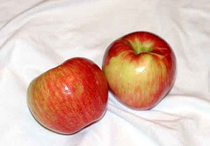 Two Honeycrisp apples, showing the distinct tw...