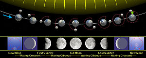 The relation of the phases of the Moon with it...