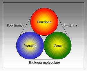 Biologia molecolare - Biochimica - Genetica