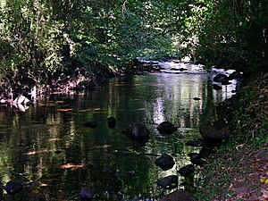 English: River under the Trees The River Erme ...