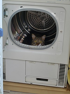 Cat in a clothes dryer