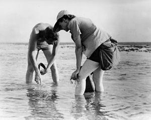 English: Rachel Carson Conducts Marine Biology...