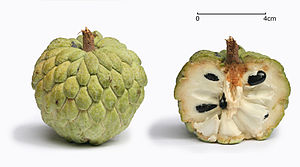 English: Sugar apple with its cross section