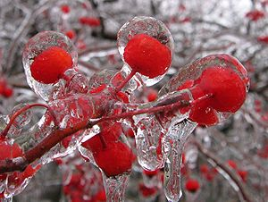 English: Ice glaze on crabapple