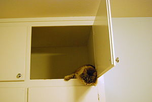 English: Cat in overhead cupboard looks down a...