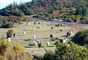 English: Pasture, Madeira island, 2006 Українс...