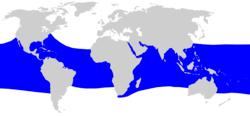 Habitat hiu paus