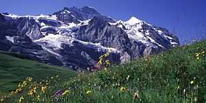 Mountain Jungfrau in The Sommer left at the To...