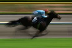 APRIL 26, 2009 - Horse Racing : The Horse raci...