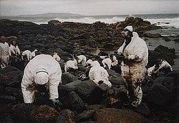 Voluntarios limpiando las costas de Galicia después de la catástrofe del Prestige, marzo de 2003