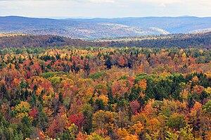 Fall foliage autumn leaf colour Vermont Hogbac...