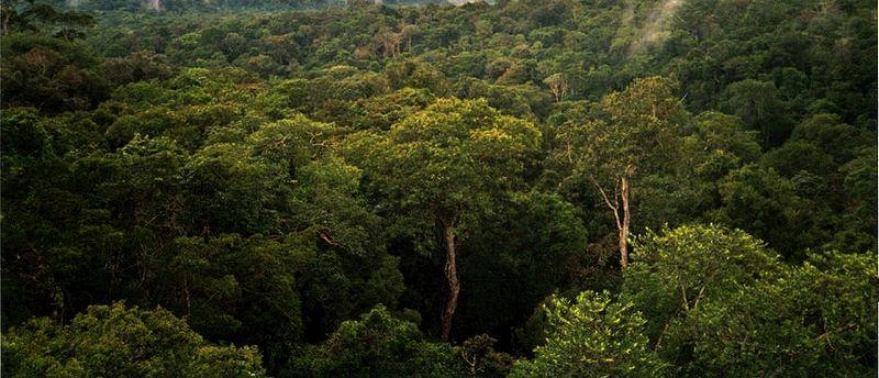 File:Amazon Manaus forest.jpg
