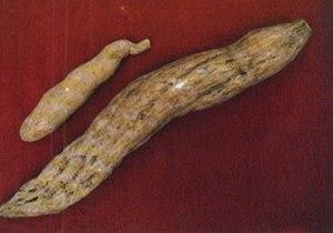 Ichintal (chayote root)
