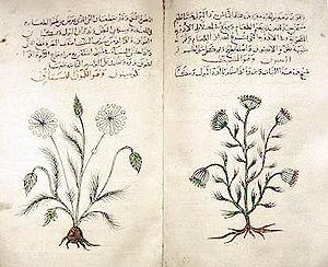 Dioscorides' Materia Medica, c. 1334 copy in A...
