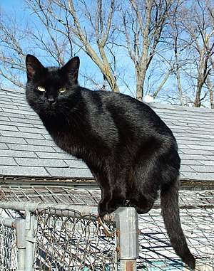 I took this picture of Lilith, a black cat fou...