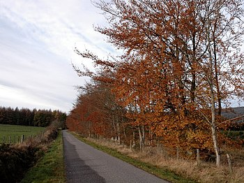 English: Road and Autumn Trees