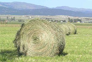 A freshly baled round bale in Montana