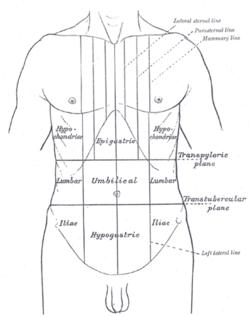 Umbilical region  Wikipedia