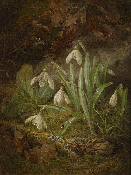 File:Josef Lauer Waldbodenstück mit Schneeglöckchen.jpg
