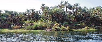 Margem esquerda (ocidental) do rio Nilo, entre Edfu e Kom Ombo