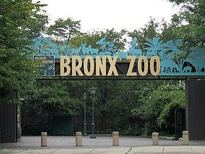 Bronx Zoo Deutsch: Bronx Zoo. English: Asia Ga...