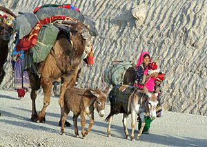 The nomadic Kuchi people migrate through the P...
