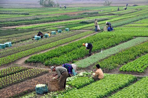 File:Agriculture in Vietnam with farmers.jpg