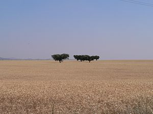 The expansive landscape of the rural Alentejo ...