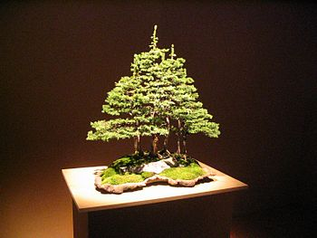 "Bonsai group planting at the ""Foire du Va..."