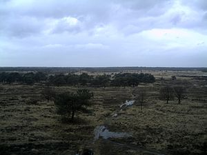 Heath of Kalmthout (Kalmthoutse Heide) from wa...