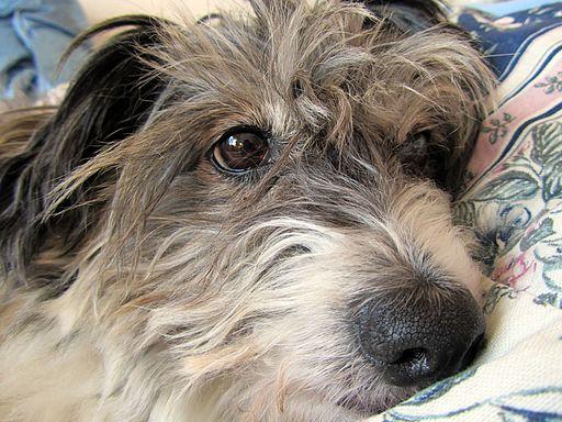 Sad Dog - Flickr - treegrow