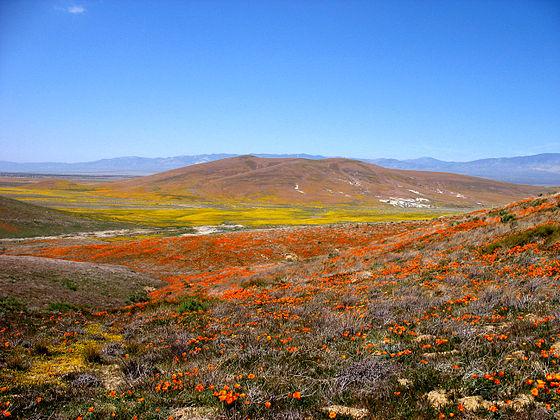 California El Tejon Ranch