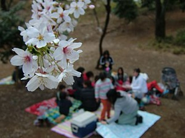 Branch of cherry blossoms and blurred people d...