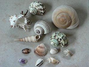 Shells קונכיות