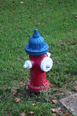 a photograph of a colorful fire hydrant in Dem...